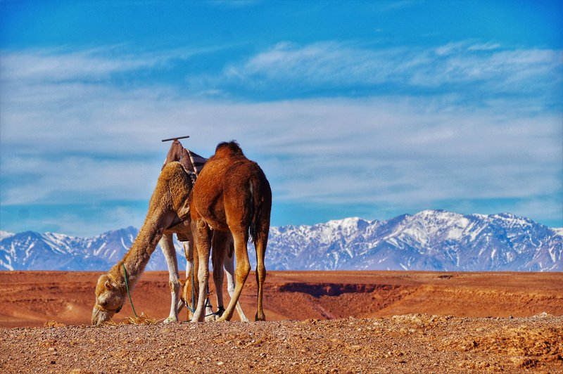 Maroko1.jpeg