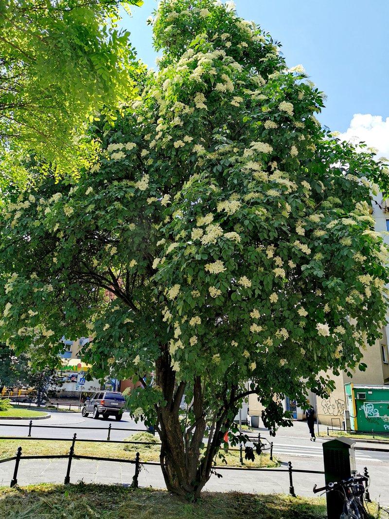 bez drzewo (002).jpg