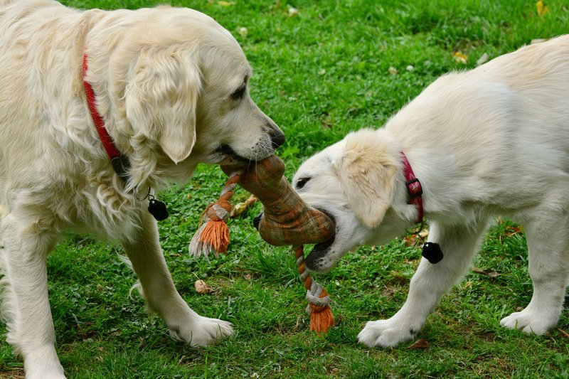 dogs-2556820_1920.jpg