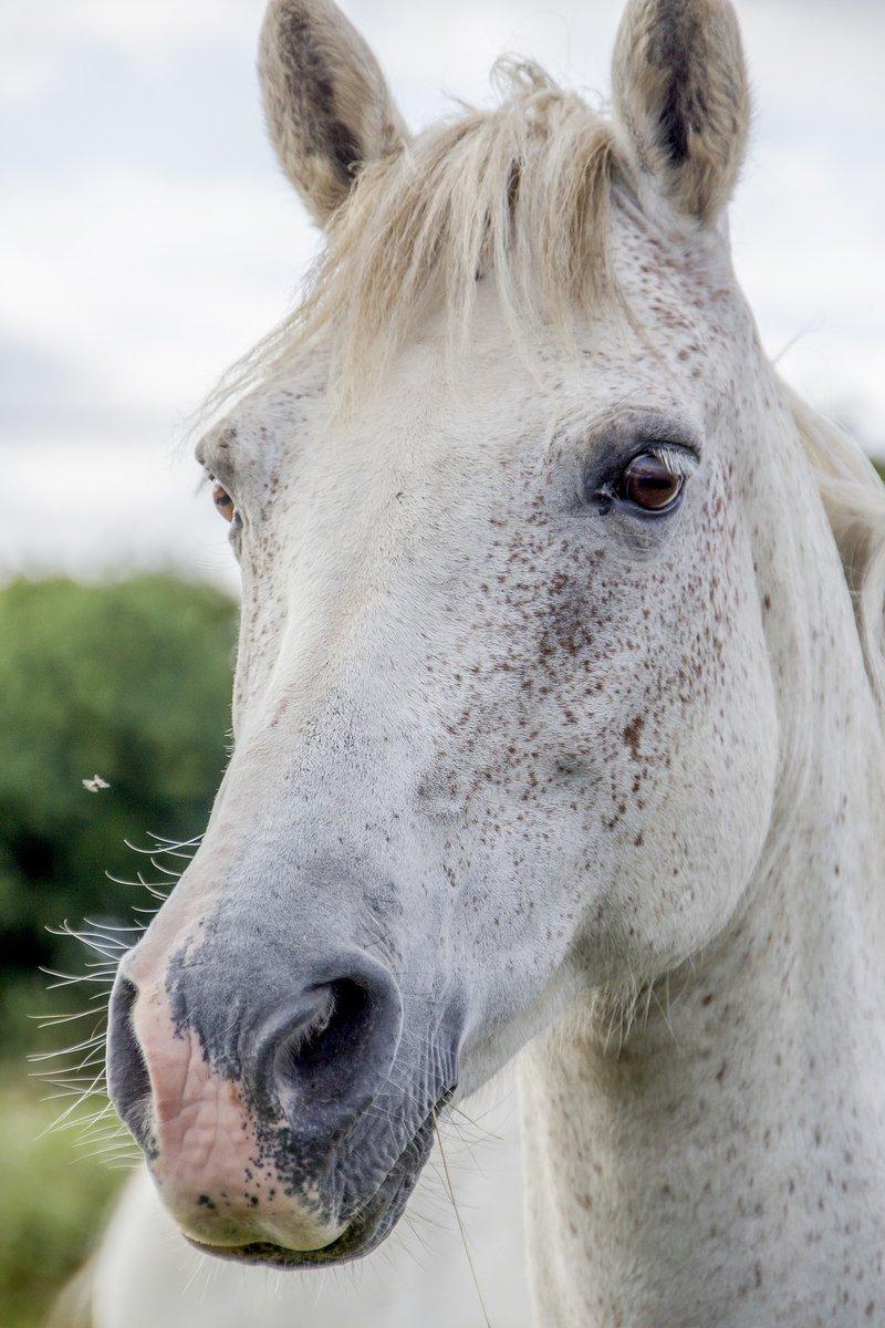 white-horse-1637430_1920.jpg
